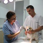 Yakın Doğu Üniversitesi Hayvan Hastanesi'nden Hayvanlara 7/24 HizmetYakın Doğu Üniversitesi Hayvan Hastanesi'nden Hayvanlara 7/24 Hizmet