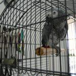 Yakın Doğu Üniversitesi Hayvan Hastanesi'nden Hayvanlara 7/24 Hizmet